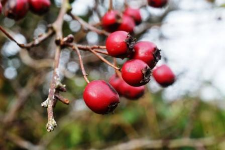 Bunch of Haws