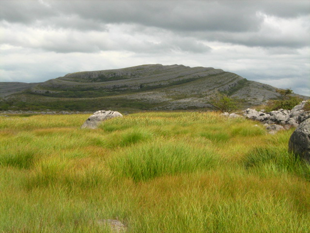 Burren Fields